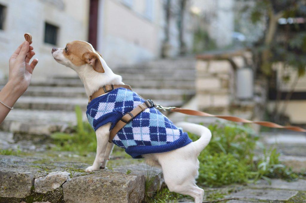 Dog stretch, dog rehab, dog rehabilitation, dog treatment