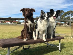 canine rehabilitation, dog rehabilitation, physical therapy for dogs, dog physical therapy