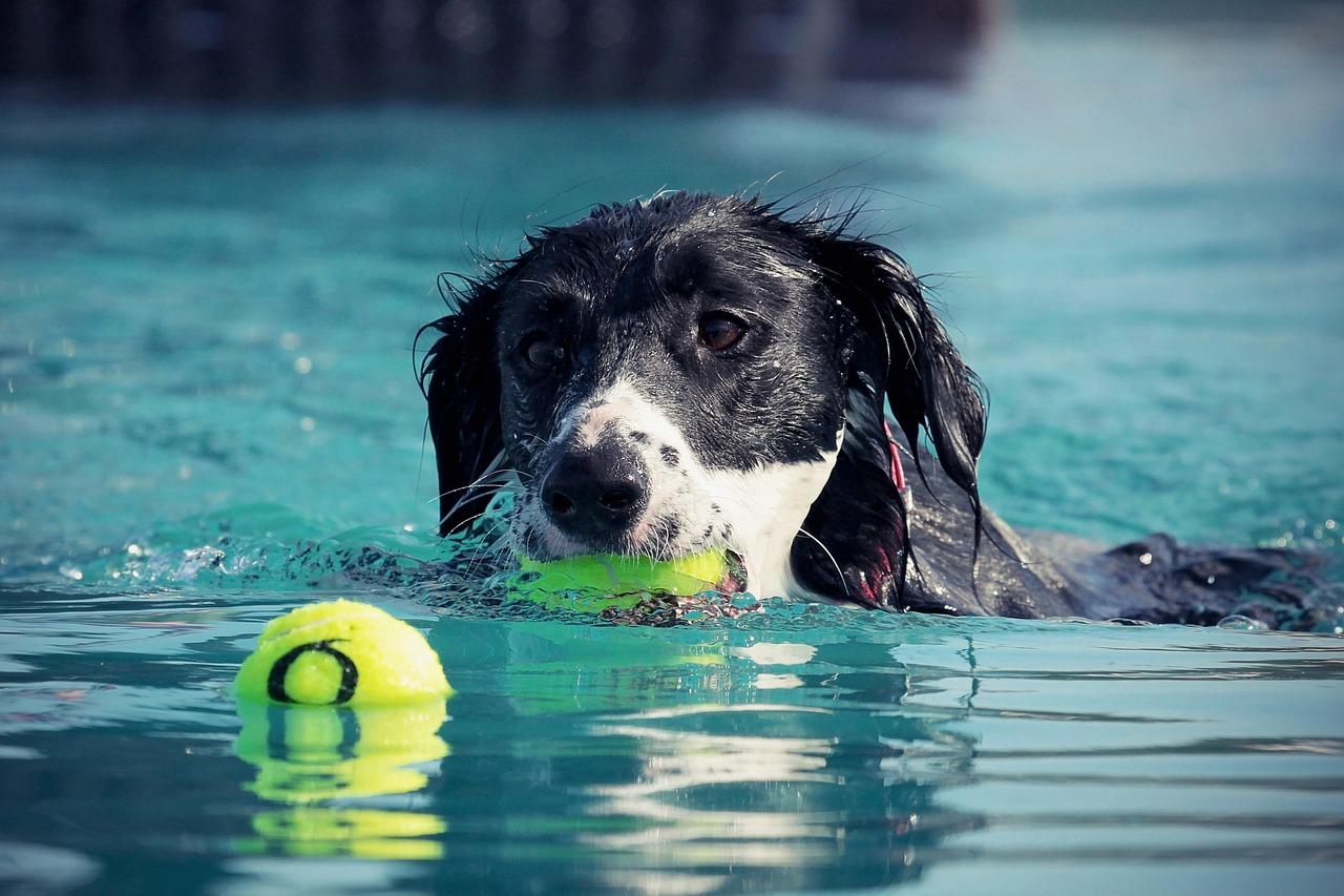 dog rehab, dog rehabilitation, dog treatment, dog osteopathy