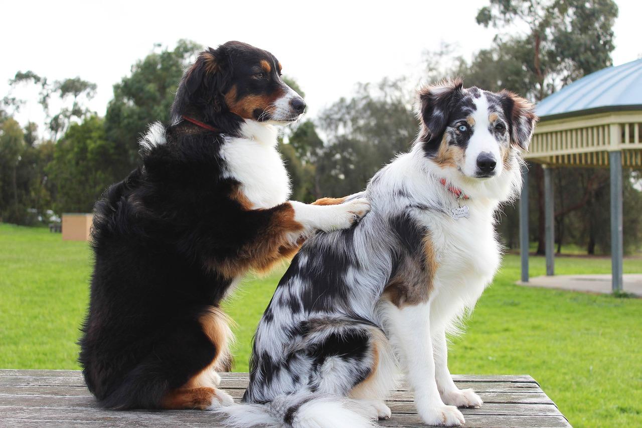 dog massage, dog rehab, dog rehabilitation, dog osteopathy