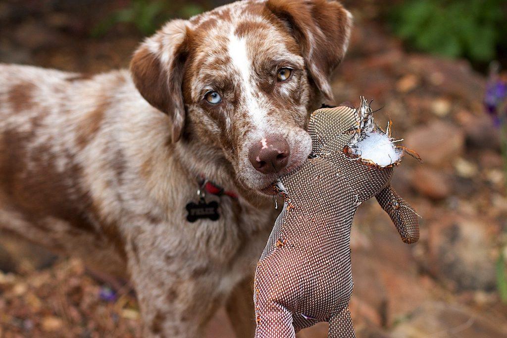 dog treatment, dog rehab, dog rehabilitation, dog osteopathy