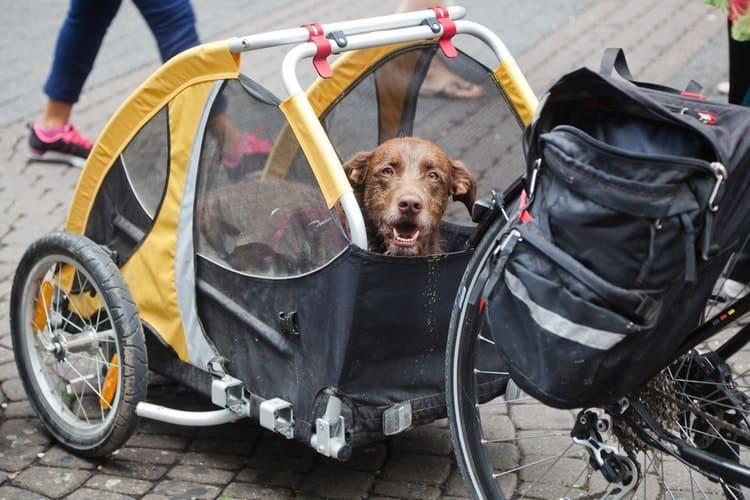 Dog bike trailer, dog hip dysplasia, dog treatment