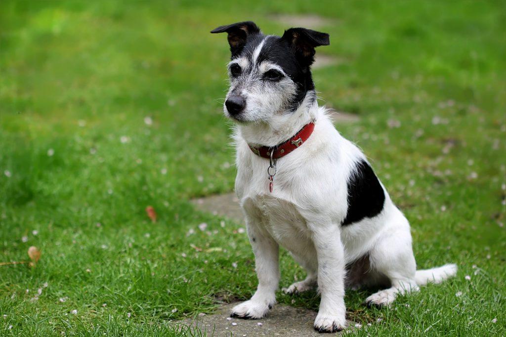 Dog agility, dog rehab, dog rehabilitation, dog treatment