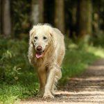 old dog, supplements for hip dysplasia, dog arthritis supplements