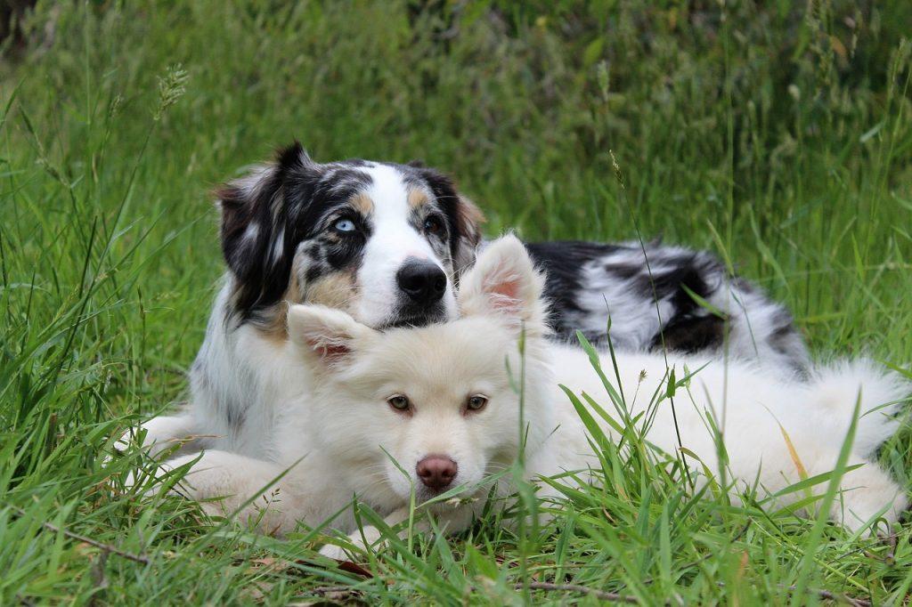 puppies, dog rehab, dog injuries, dog rehabilitation, dog osteopathy